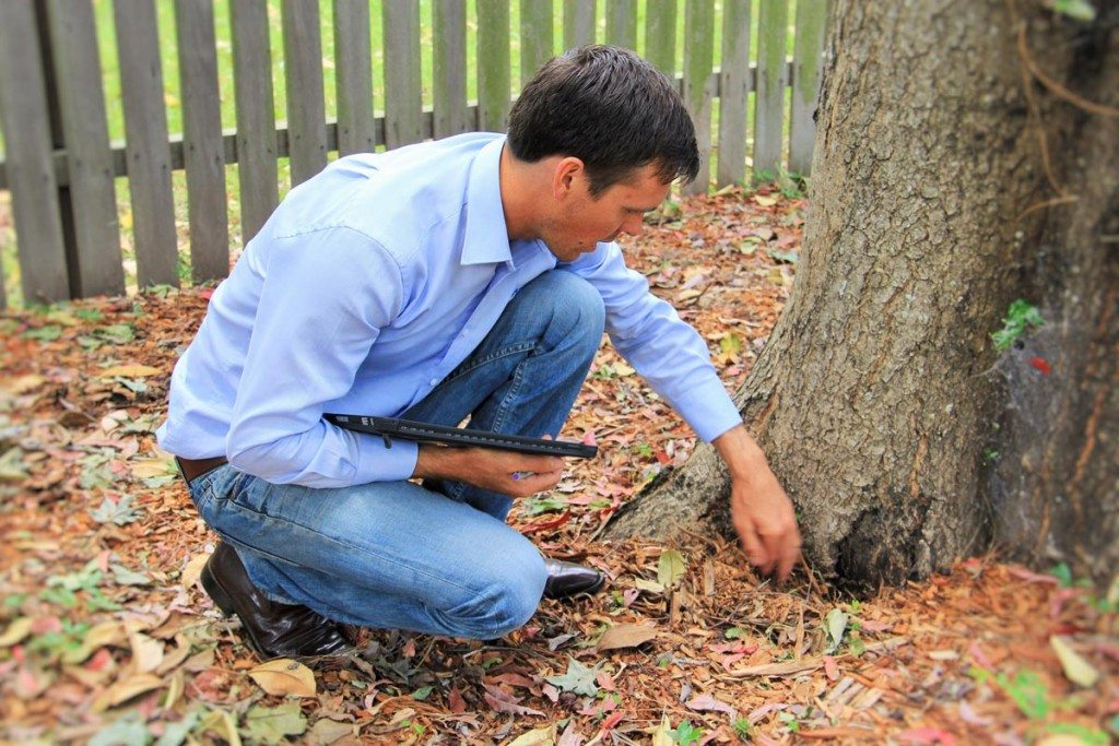 consulting arborists in maitland and hunter valley