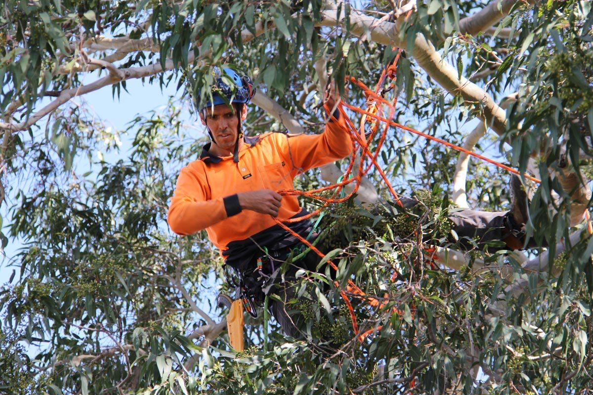Tree pruning Hunter Valley
