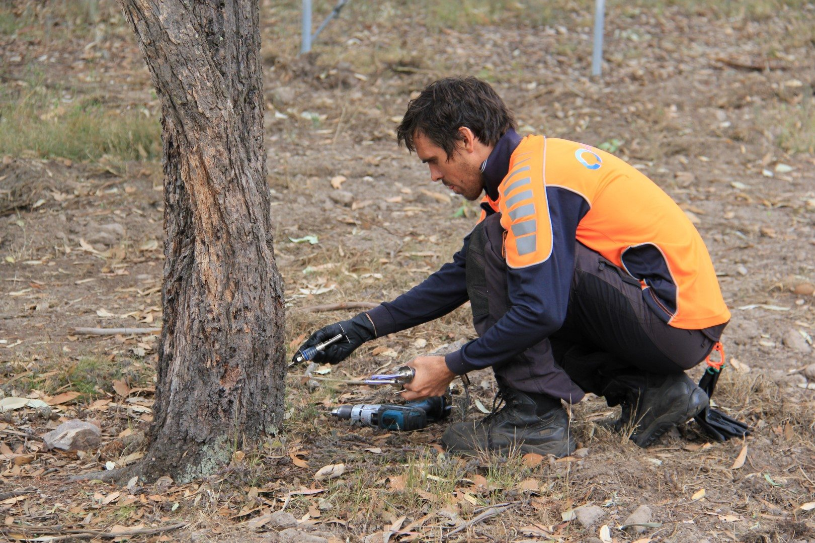 tree maintenance in Maitland and Hunter Valley