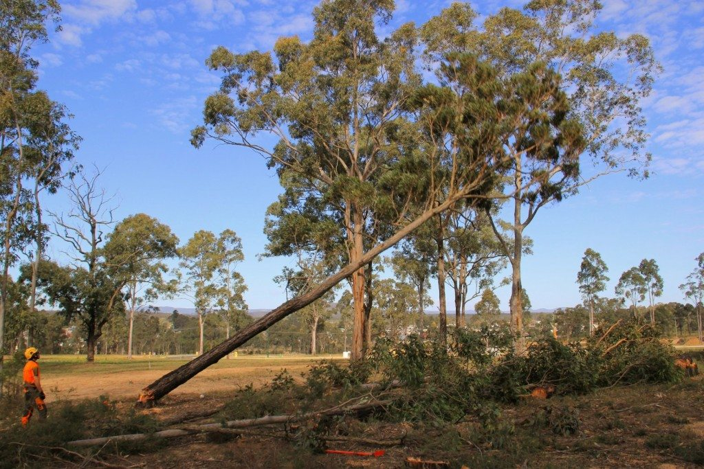 Block clearing hunter valley