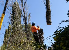 Newcastle Tree Removal