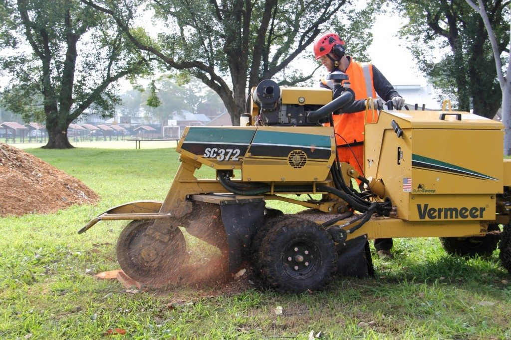 Stump grinding Maitland