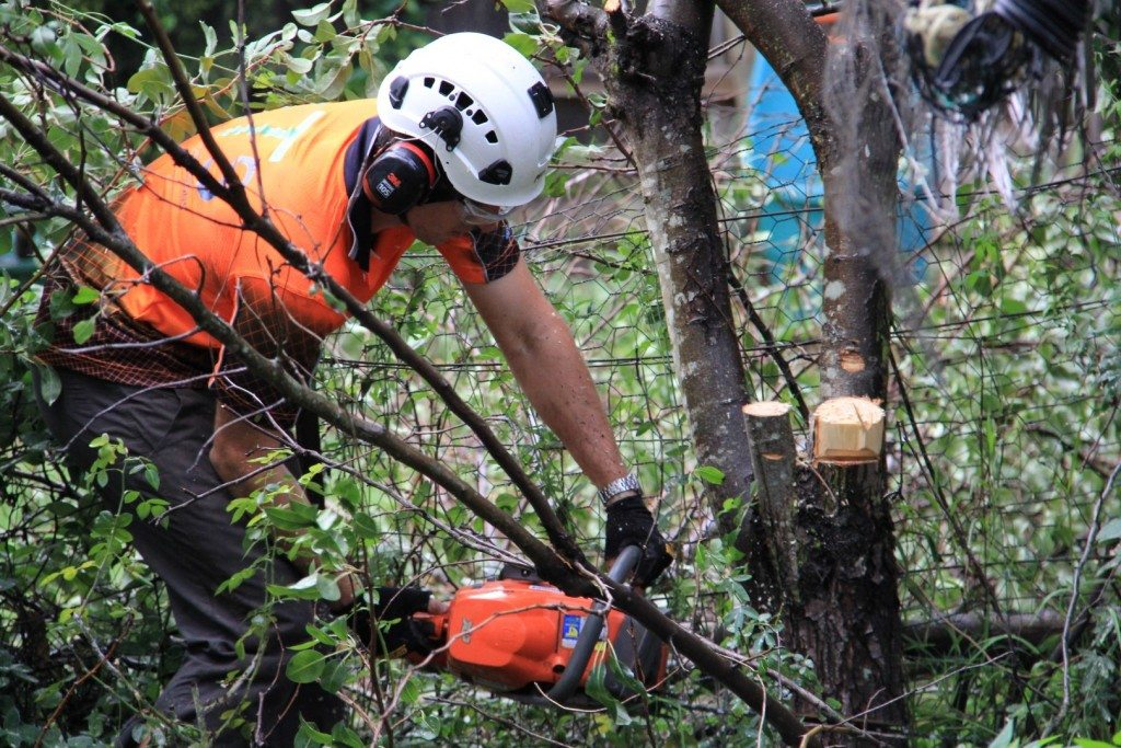 Tree Cutting Newcastle