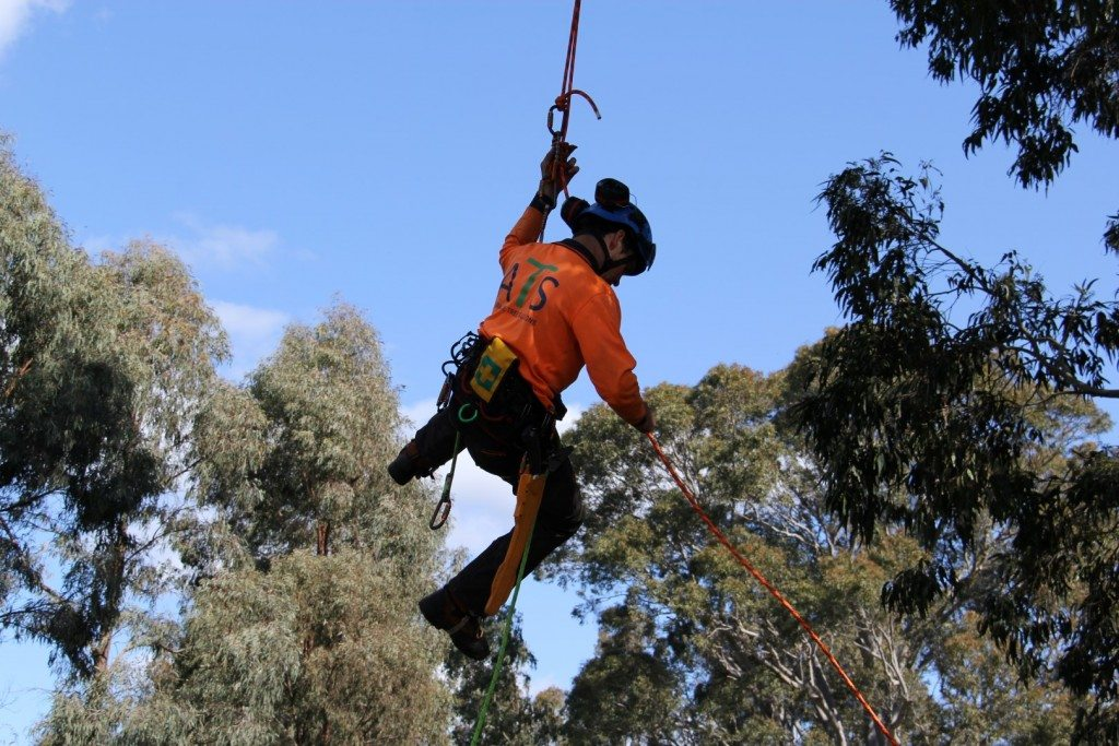 tree work hunter valley