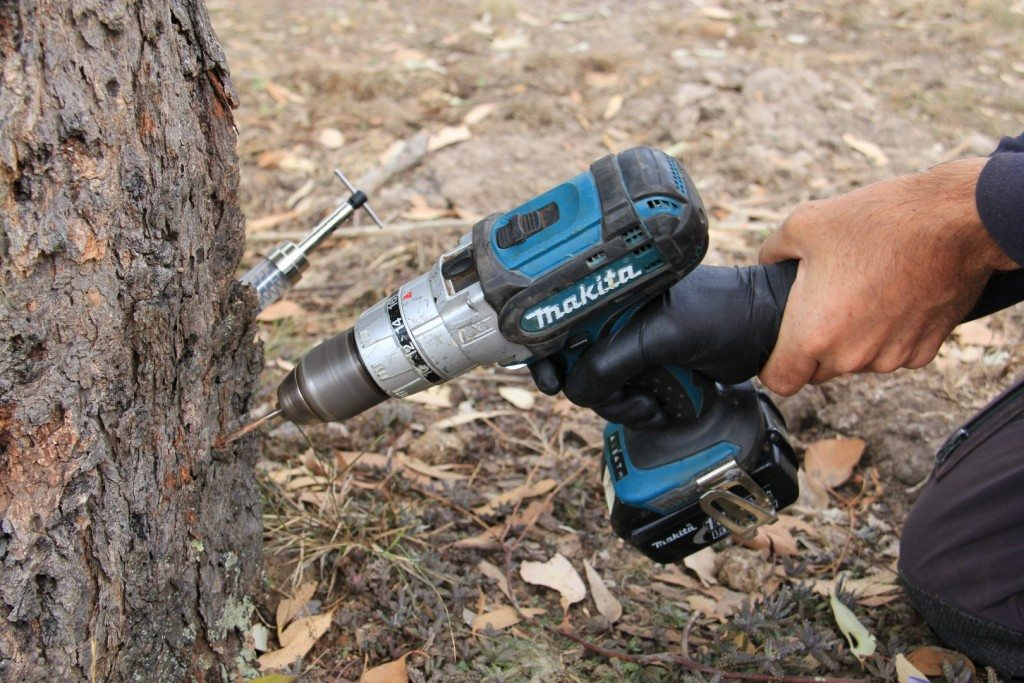 Tree injection drilling
