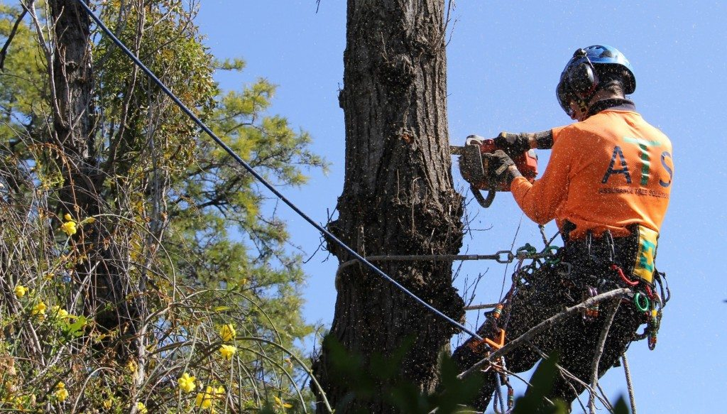 commerical tree removal in newcastle and hunter valley