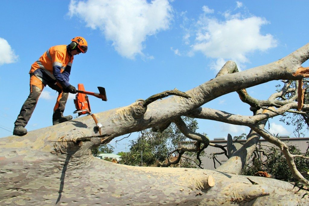 Tree removal Port Stephens