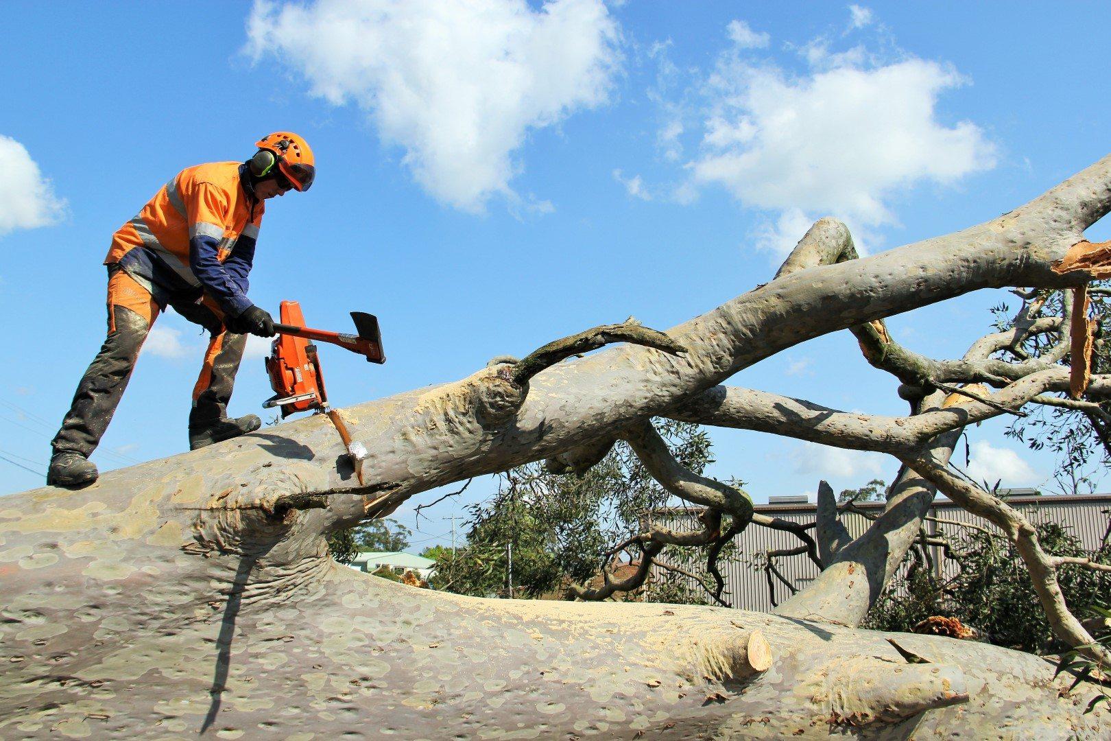 Tree removal Port Stephens