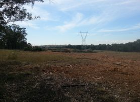 land clearing muswellbrook